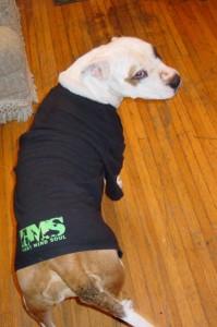 best shirts dog