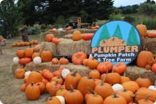 plumper pumpkins portland