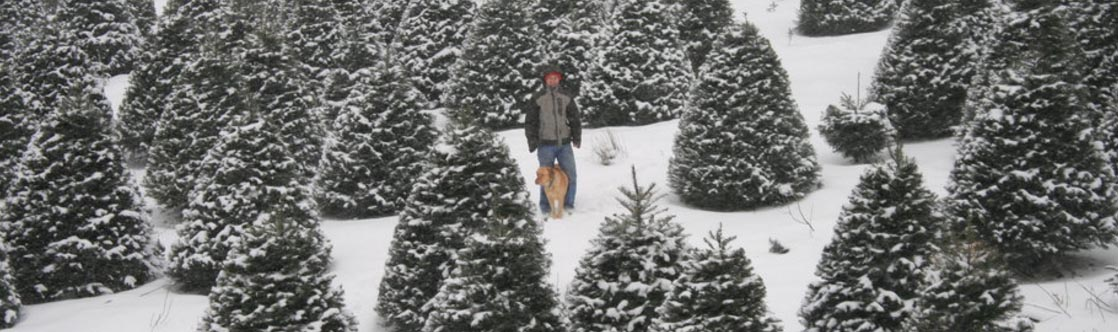 christmas trees portland