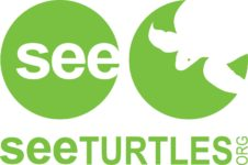 see-turtles-hms-nation