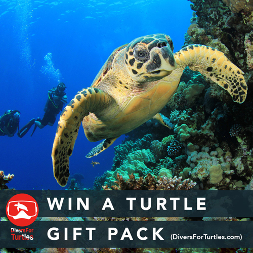 Win Divers For Turtles Gift Pack
